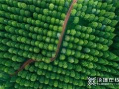 海创植一株绿色,溢一片春光!